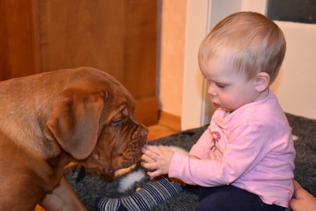 Baby teilt Kecks mit Welpen