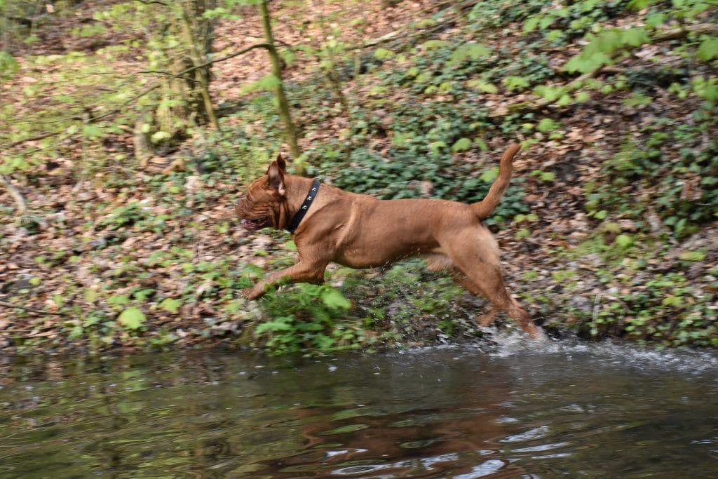 Hund springt ins Wasser