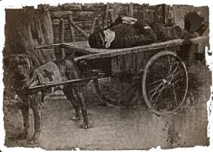 Dogue de Bordeaux avec un soldat sanitaire (1ère Guerre)