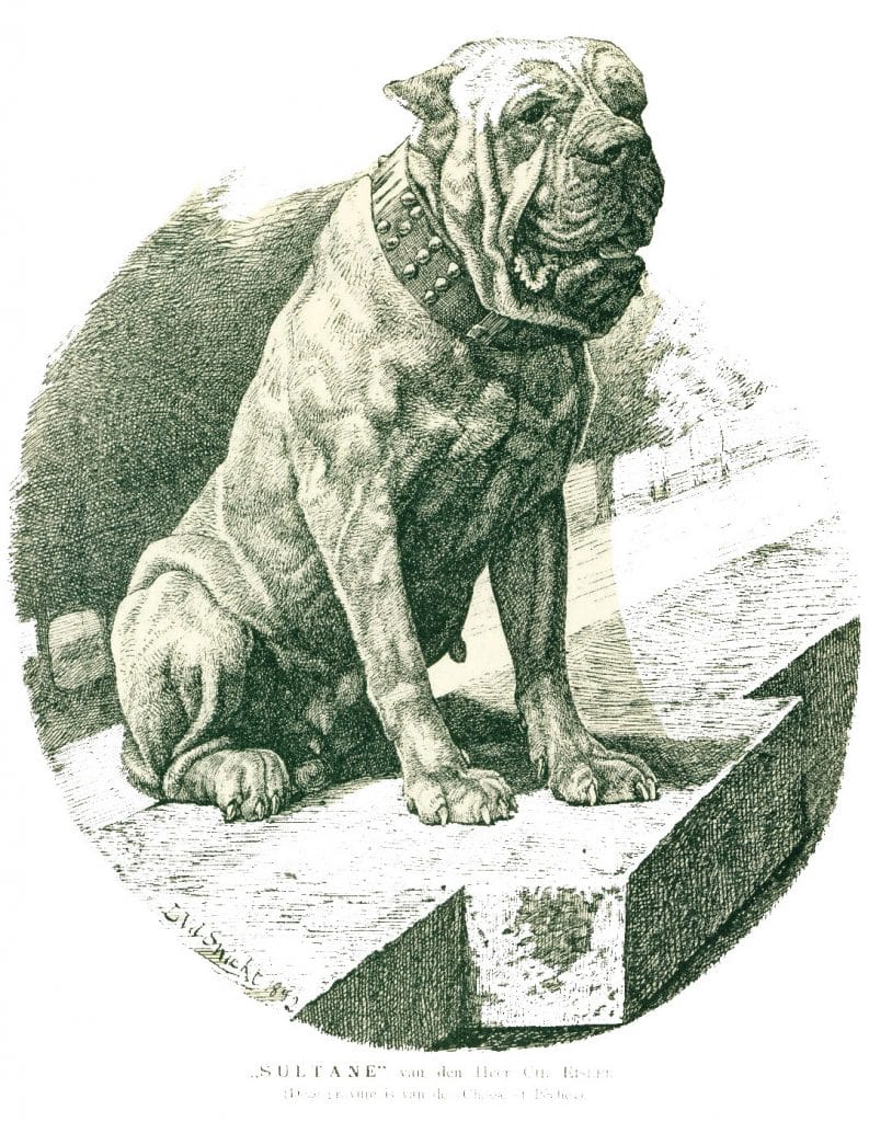 Sultane, propriétaire M. Ch. Eisler - Cette gravure a été publiée en 1892 dans la revue « Chasse et pêche ».
