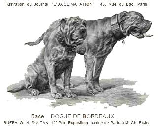 """Illustration du journal """"L'ACCLIMATATION"""" sur l'exposition canine de Paris 1892, 1er prix à Buffalo et Sultane, Propriétaire : M. Ch. Eisler"""
